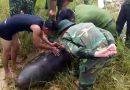 Hà Tĩnh: Trục vớt thành công quả bom 'khủng' dưới sông Lam
